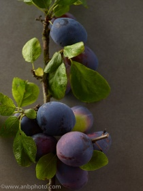 ANBP_140813_THE_Plums_57